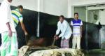 পুঁজি সংকটে নাটোরের চামড়া ব্যবসায়ীরা