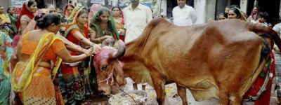 ভারতে গরুকে 'রাষ্ট্রমাতা' করার বিল বিধানসভায় পাশ